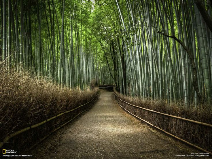 I love this...Walks, Paths, Nature, National Geographic, Bamboo Forests, Gardens, Trees, Places, Kyoto Japan