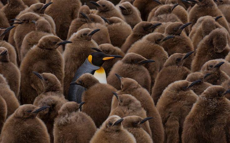 Победители конкурс фотографий животных от лондонского зоопарка 2016