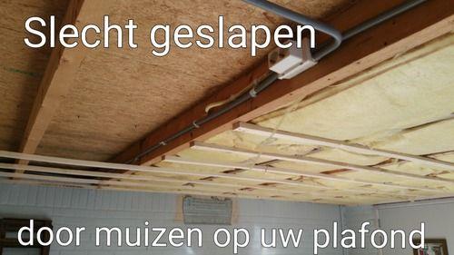 Muizen boven het plafond is een veel voorkomend probleem. Ze kunnen behoorlijk irritant zijn want die kleine beestjes kunnen behoorlijk kabaal maken. Slapeloze nachten en stres als gevolg. Nachtrust die verstoord wordt door muizen boven