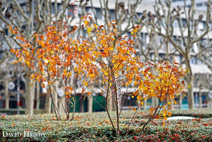 La Défense Paris, Winter trees, David Henry Photography