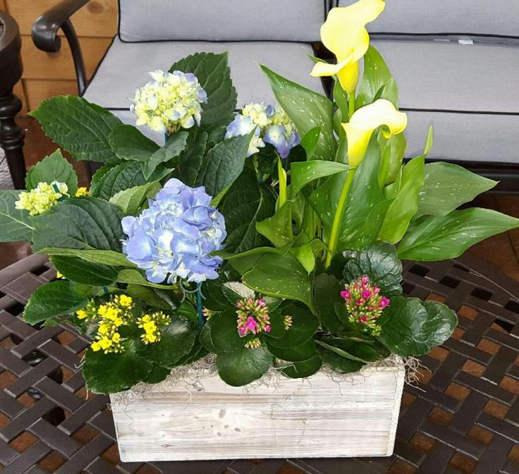 Sympathy Caan Floral has a wide selection of funeral, casket, sympathy flowers, plants and tribute memorial pieces. Our expert florists and staff will help you design and order the right sympathy …