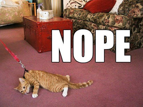 This cat ain't going. lolol: Cats, Laughing, Nope, Dogs, Walks, Mondays Mornings, So True, Funny Stuff, Cat Walk
