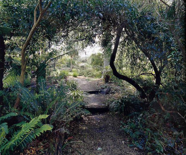 the 1495 best australian native gardens images on pinterest