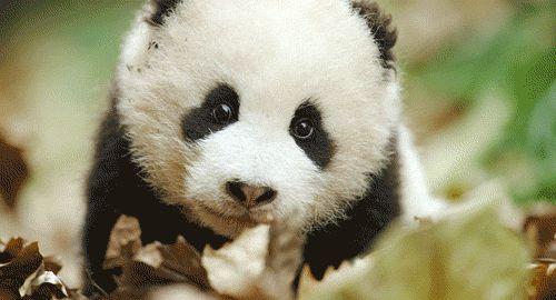 This list is straight up panda-monium.