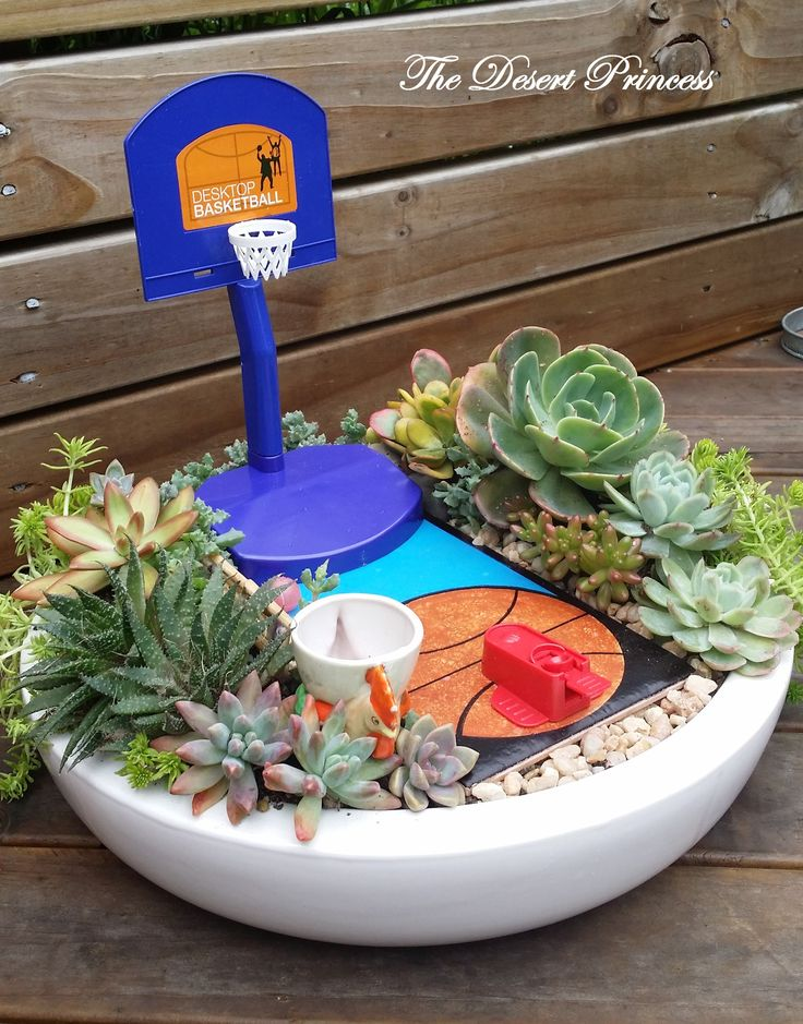 Succulent Mini Garden Basketball Theme Design by The Desert Princess www.facebook.com/thedesertprincess1006