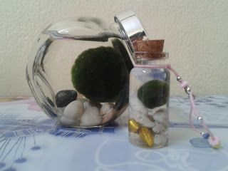 marimo, moss ball, algae ball, gifts, aquarium, aqua, plant