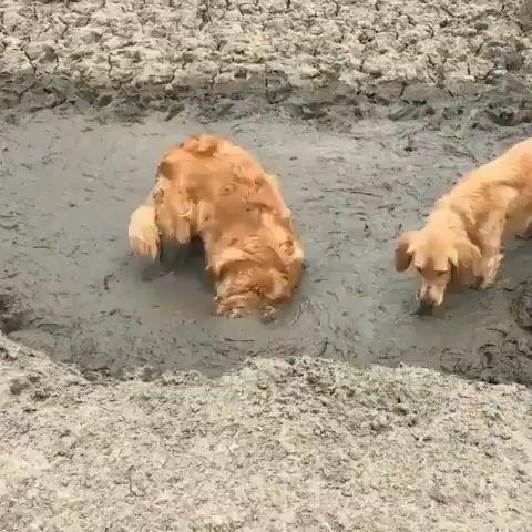 We love mud!!!