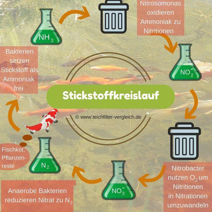 Biologische Filterung, Stickstoff-Kreislauf Teichfilter