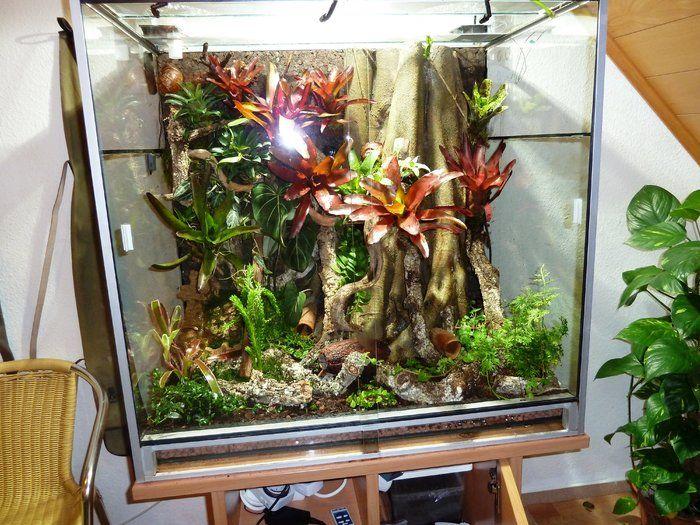 1000 images about geckos und terrarium on pinterest crested gecko vivarium and geckos. Black Bedroom Furniture Sets. Home Design Ideas
