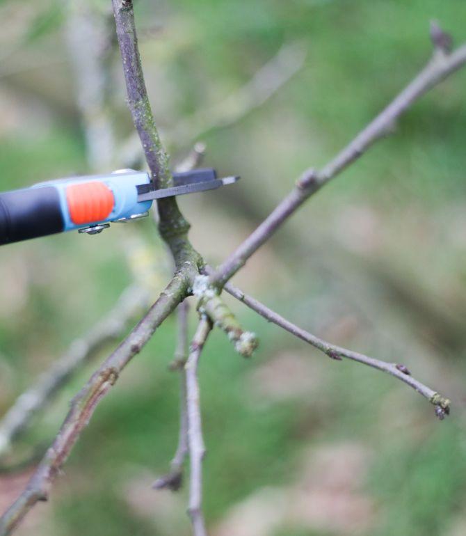 apfel und birnenbaum schneiden leicht gemacht pflanzen tipps tricks tipps. Black Bedroom Furniture Sets. Home Design Ideas