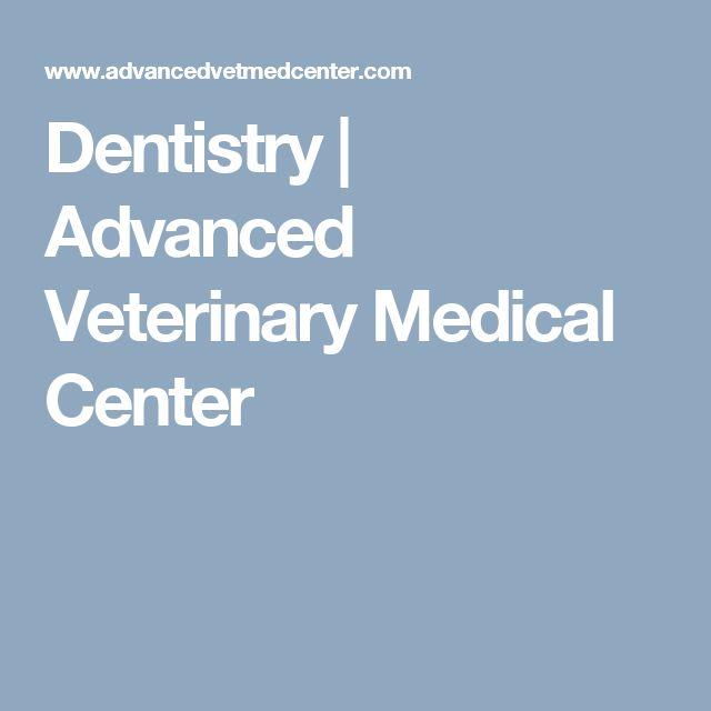 Dentistry   Advanced Veterinary Medical Center