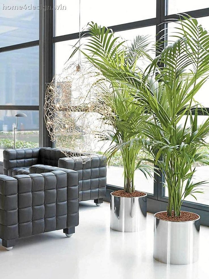 Living Room: How To Decorate Small 2017 Living Room With Plants Transitional Design In Home Plants Fabulous Plants For The 2017 Living Room Big 2017 Living Room Plants 5 Decoration Idea 2017 Living Room Plants: living room plants
