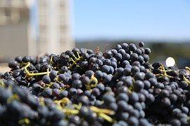 プレミアムなワインを探しに出かけよう山梨勝沼ワイナリーめぐり6選