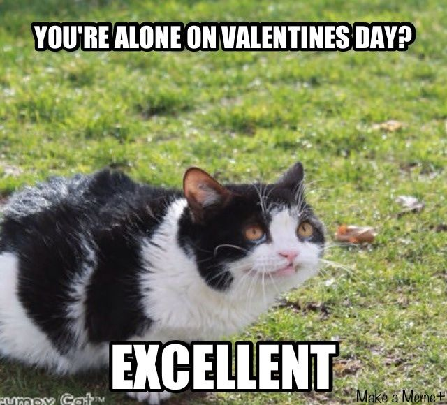if you're spending valentine day alone meme - 314 best Cats are Funny images on Pinterest