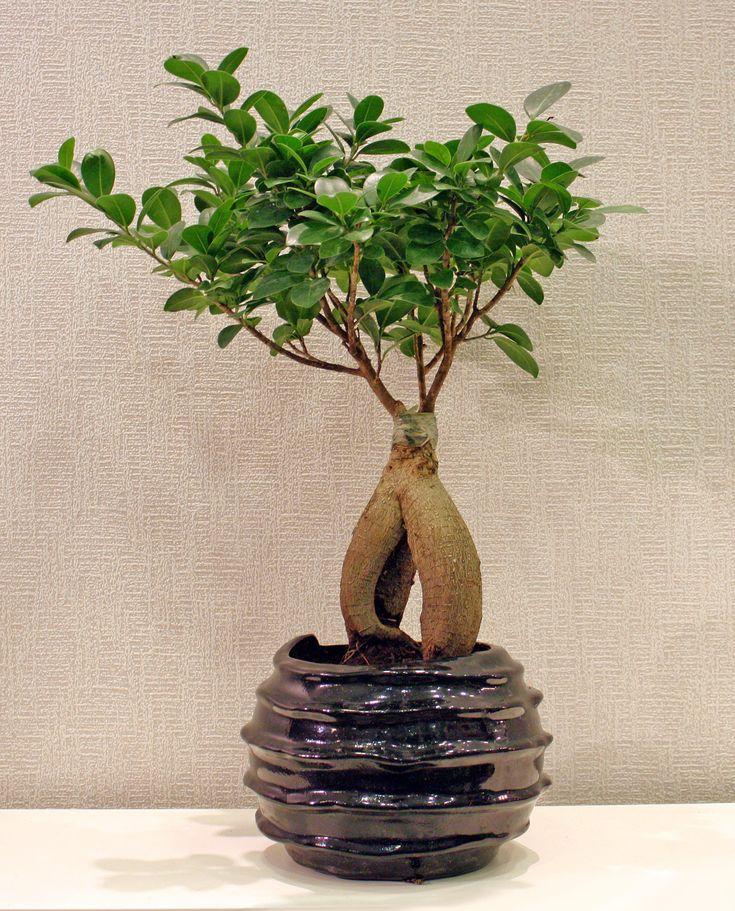 Bonsai σε γλαστράκι
