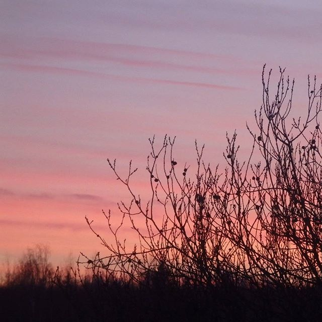 Подмосковные вечера #viewfrommywindoвечера #withoutfilter #nature #winter #window #sunset #закат #изокна #природа #зима #безфильтров
