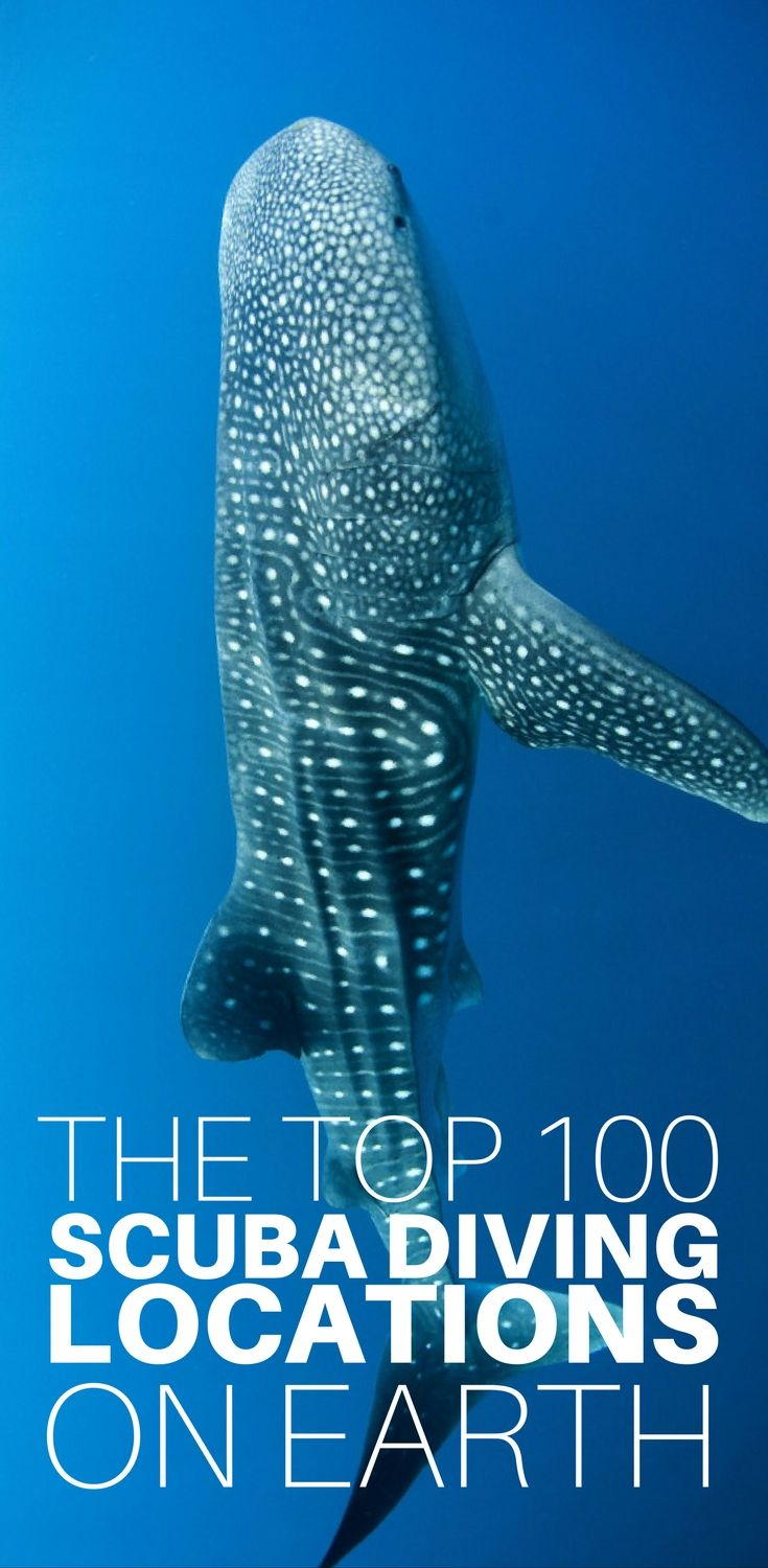If you are looking for a list of the very best diving in the world, look no further! We have compiled the top 100 scuba diving locations on Earth, and each one is waiting for you to visit and explore. Click to see the whole list for the locations of the b http://www.deepbluediving.org/trash-ocean/