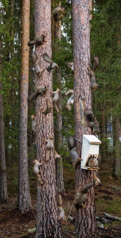 squirrel tree party (photoshop)
