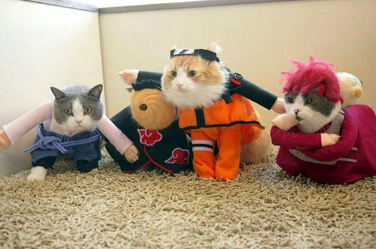 Hahaha, Naruto, Sasuke, Gaara and Tobi Cosplay ♥♥♥ #Kittens #SoCute #Creative