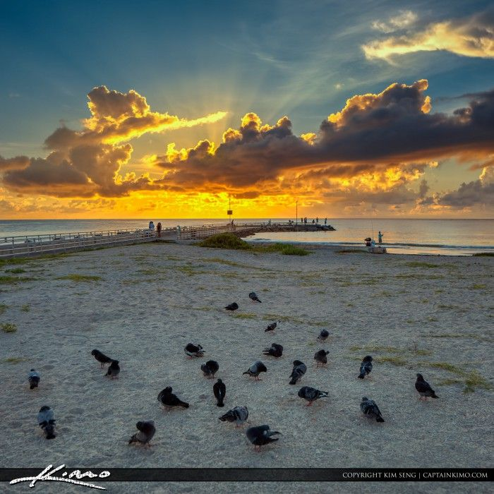 Pigeons at the Jupiter Inlet during sunrise over the jetty in jupiter Florida. HD Rimage created using Photomatix Pro and Topaz software.