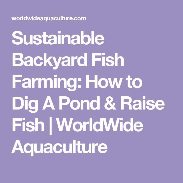 17 Best Ideas About Fish Farming On Pinterest Aquaponics