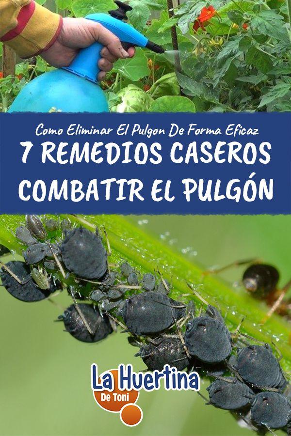7 Remedios Caseros Eficaces Para Combatir El Pulgón La Huertina De Toni Pulgones En Las Plantas Plagas En Las Plantas Insecticida Natural Para Plantas