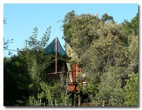 Philosophers Perch Tented Tree house - South Africa