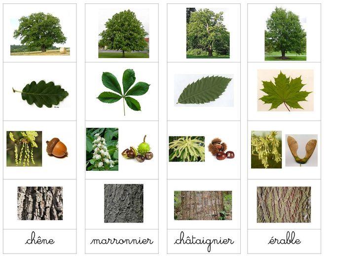 Reconnaissance des arbres | ti' loustics