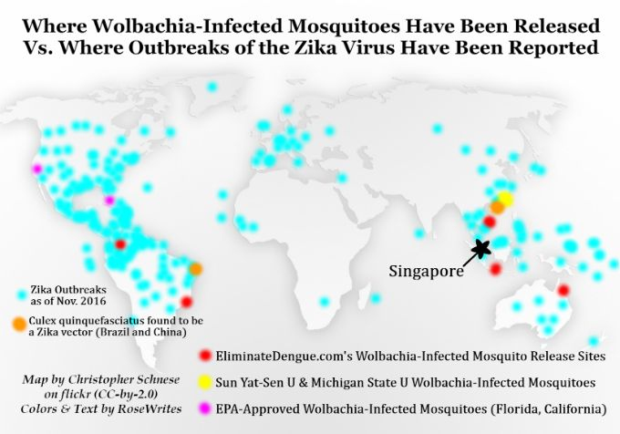 Wolbachia-Infected Mosquitoes Might Reduce Dengue, Enhance Zika, and Cause a Million Souls to Become Sterile