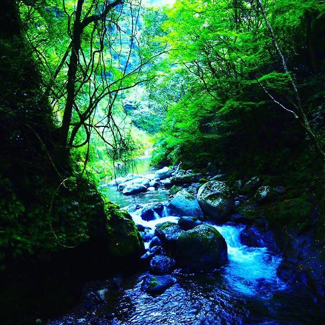 【tjm665】さんのInstagramをピンしています。 《#天安河原#九州#旅#旅行#カメラ好きな人と繋がりたい #ファインダー越しの私の世界 #写真好きな人と繋がりたい #japan #trip #travel#traveller #jp#9月#自然#nature #followme #forest #森#林#森林》