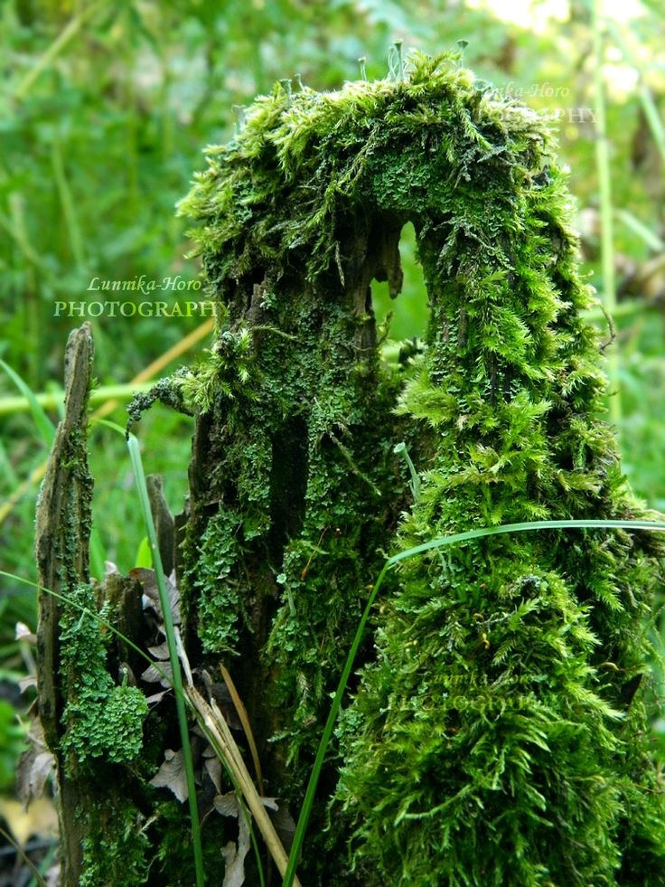 moss at the forest`s stumb by Lunnika-Horo.deviantart.com on @DeviantArt