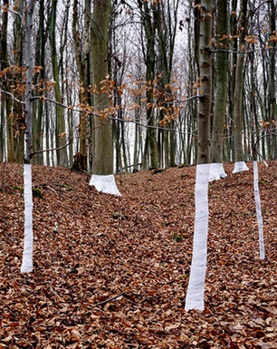 """Channelling the great walker-scupltor Richard Long, Welsh-born artist and photographer Zander Olsen is slowly wrapping the UK's woodland in white material. Tree, Line, Olsen says, not shy of a pun, is """"an ongoing series of constructed photographs rooted in the forest"""" – one that explores the relationship between """"tree, not-tree and the line of horizon."""" A frustratingly focussed website suggests Olsen has all of his time wrapped up (sorry) in this one project, but that's fine – these images…"""