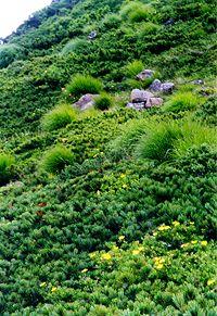 北海道のアポイ岳高山植物群落の草花を見ながらの登山は心洗われる。