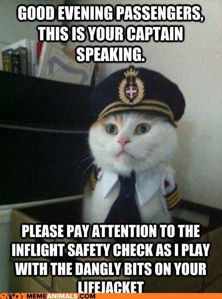 2cef5ffe076dba8951c7c210c71a3b6e hello beautiful crochet projects 11 best cat pilot meme images on pinterest ha ha, kitty cats and
