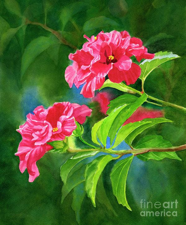 Two Hibiscus Rosa Sinensis Blossoms With Background Art Print by Sharon Freeman