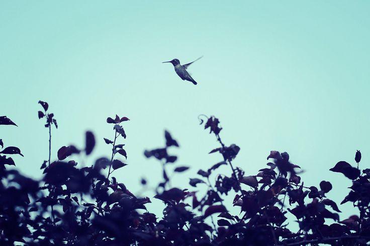 Happy hummingbird | by KaseyEriksen