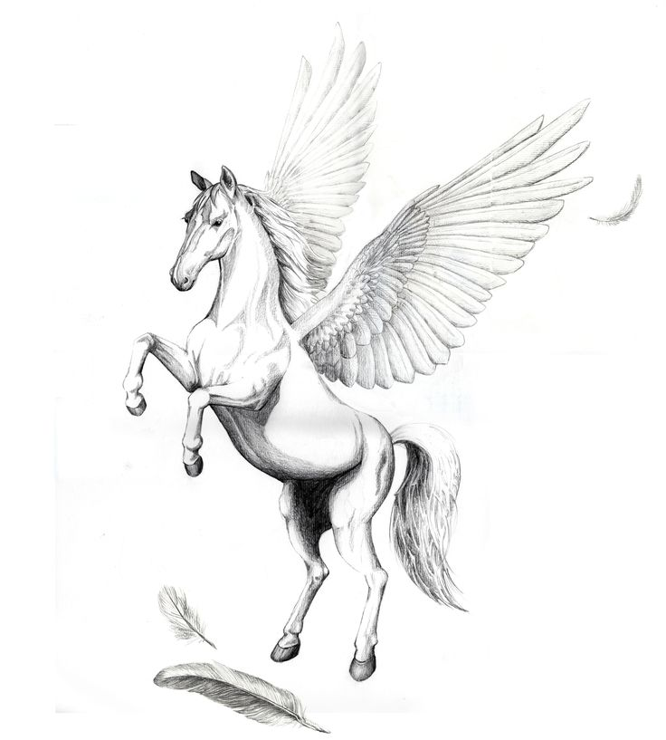 25 Best Ideas About Pegasus Tattoo On Pinterest Fairy