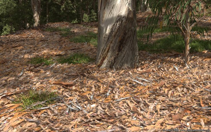 ArtStation - Eucalyptus undergrowth, Frédéric Bec