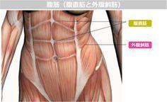 通常の腹筋では、くびれはできないって知っていましたか?キュッとくびれたウエストを目指すなら、お腹の横にある腹斜筋を鍛えることが大切です!ここでは、立ったままできる腹斜筋トレーニング法をご紹介したいと思います。1回でも効いているのが実感できるはず♡