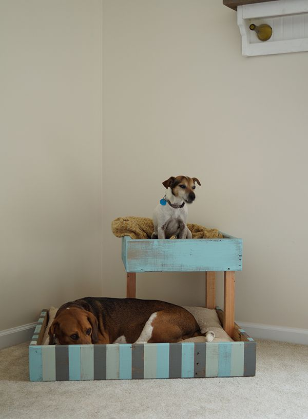 Best 25 Dog Bunk Beds Ideas On Pinterest Dog Beds Dog
