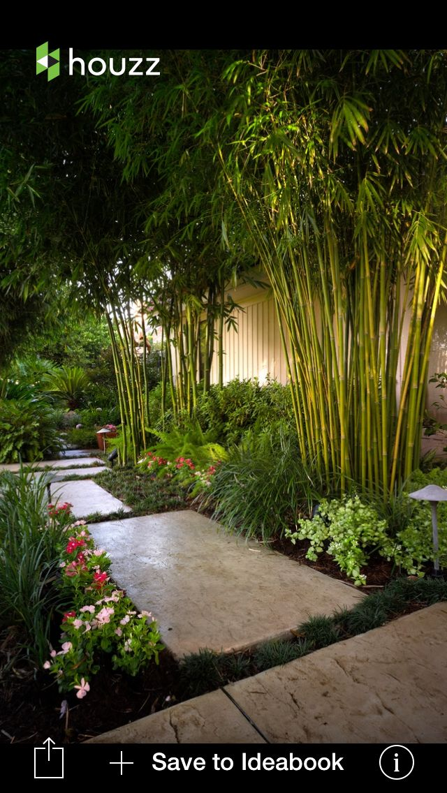 Bamboo and shrubs