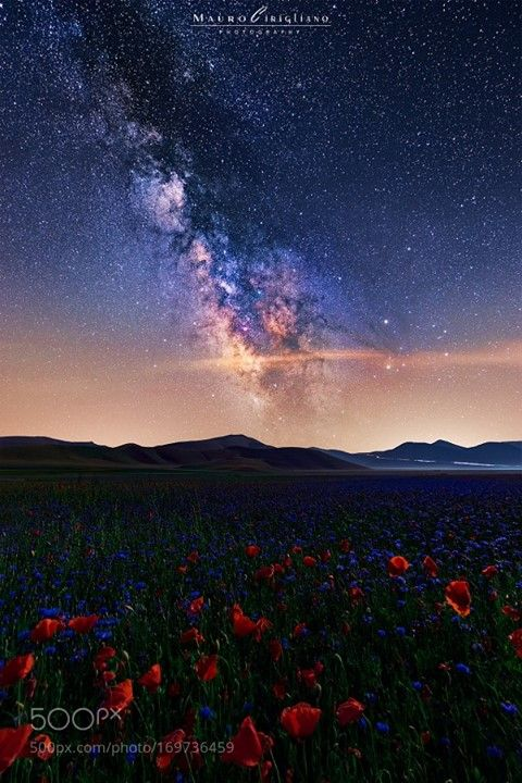 Flowering stars La fioritura in tutto il suo splendore ! La via lattea in bella…