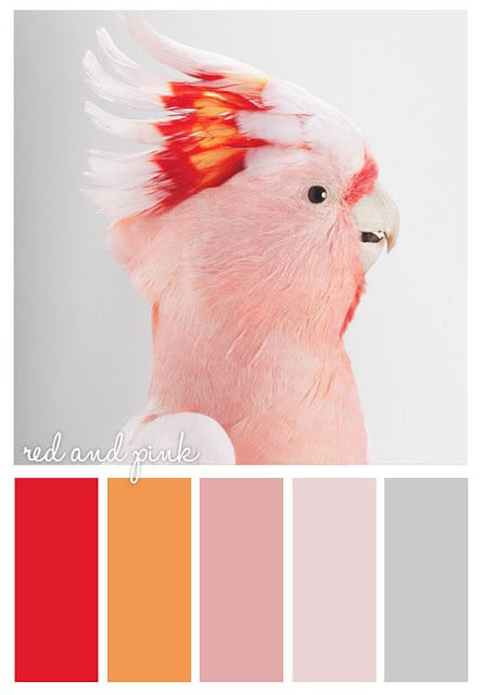 Color Palette for Jewelry and Friendship Bracelets Inspiration (Five) #Neon #Red #Orange #Pink #Gray