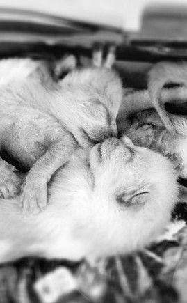 Como tratar de gatinhos recém nascidos?