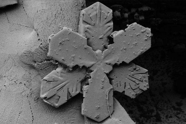 Snowflakes under an electron microscope