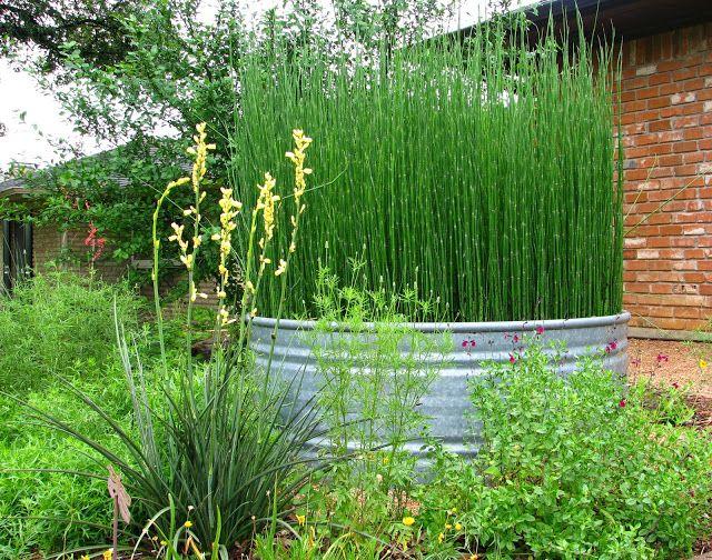 184 best ideas about park on pinterest restaurant track for Pond reeds for sale