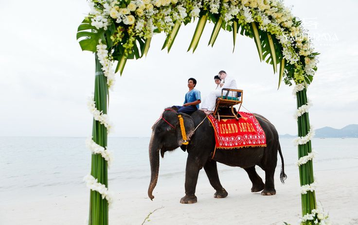 Exotic Elephant Ride on the Beach!