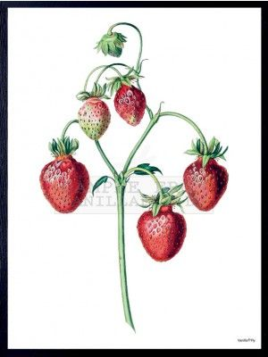 STRAWBERRY POSTER FROM VANILLAFLY #PSC104