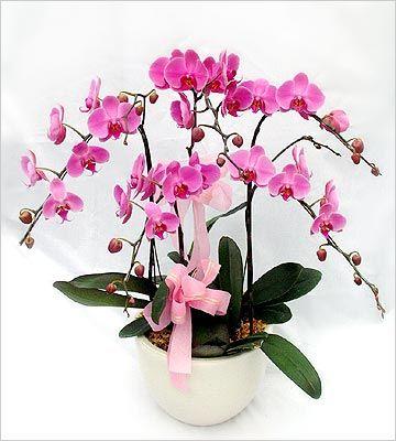 Rangkaian Bunga Anggrek Bulan | Toko Bunga by Florist Jakarta