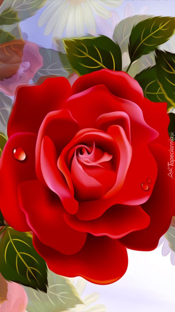 Tapeta Na Telefon Czerwona Roza Dodana Do Kategorii Roza 2d Oraz Do Podkategorii Przyroda Kwiaty Grafika Komputerowa Dodana Rosas Vermelhas Roseiras Rosas